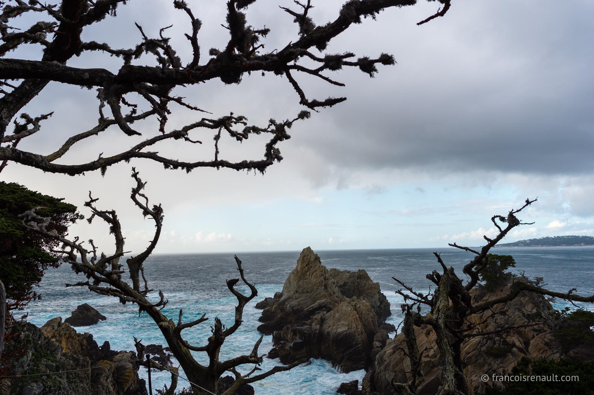 Point Lobos State Reserve, Carmel-by-the-Sea, Californie, USA.